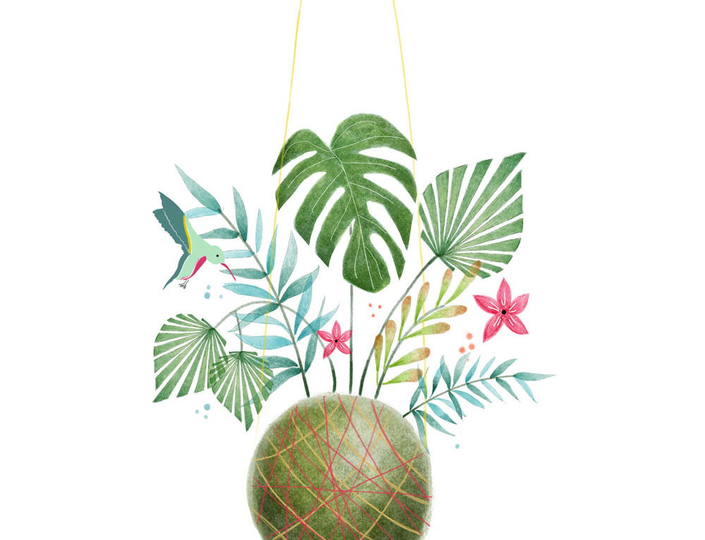 KOKEDAMA ILLUSTRATION