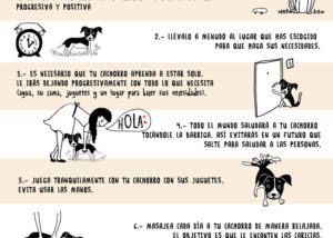 Infografía ilustrada