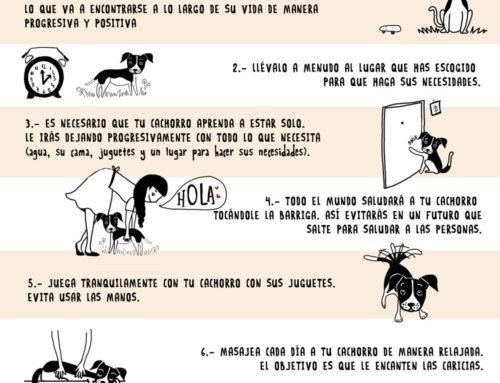Infografías PAT Educadora canina