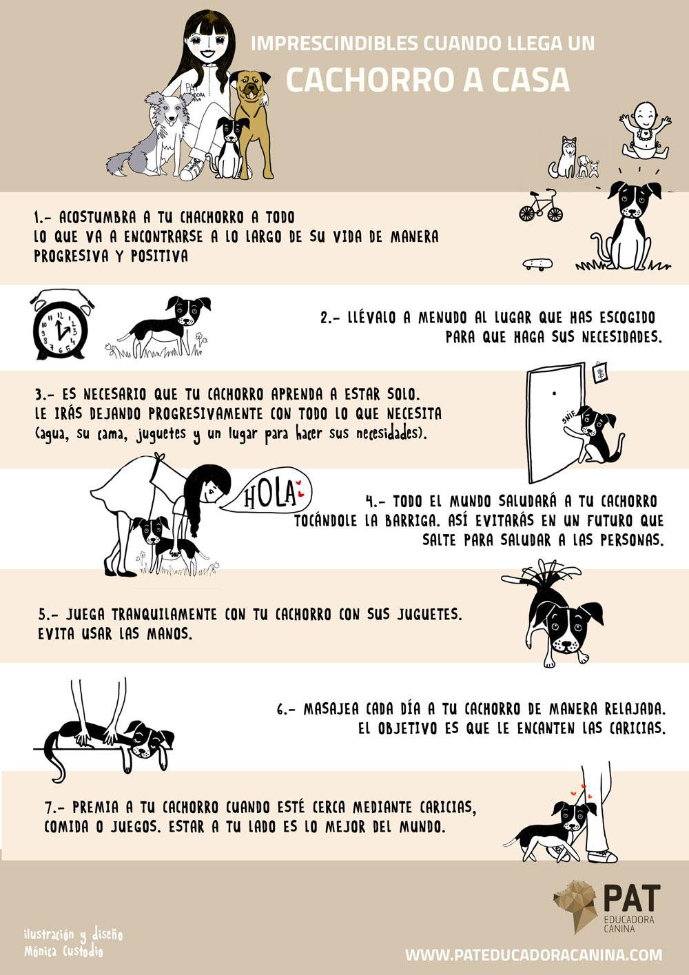 Infografía Pat Educadora Canina